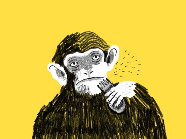 scimpanze_1067