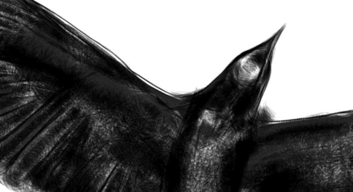 labbate-corvo